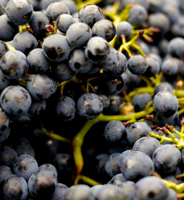 Must Visit Wineries In SC