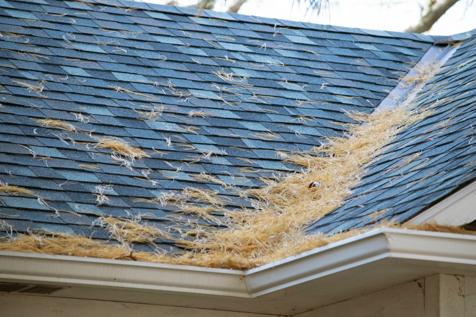Why You Should Hire A Professional Roof Cleaning Company