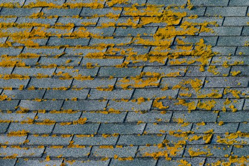 Why Clean Your Roof