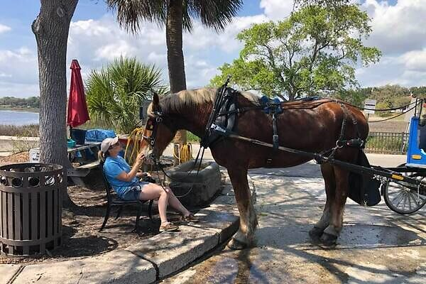 Southern Rose Buggy Tours
